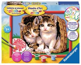 Katjes in een Mand