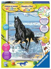 Paard in de Branding