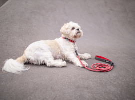 Dog Copenhagen Urban Rope Leash