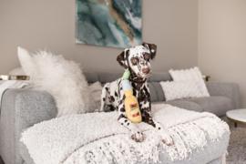 P.L.A.Y. Pet PLAY Tropical Paradise - Canine Cerveza