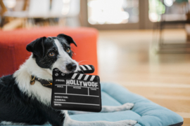 P.L.A.Y. Pet  Hollywoof Cinema Collection - Doggy Director Board