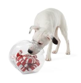 Planet Dog Orbee -Tuff Mint
