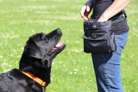 EQDog Click' N Treat Bag Beloningszakje