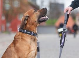 Dog Copenhagen Urban Halsband Zwart