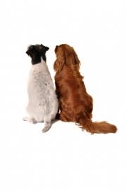 Maat van de hond: halsbanden