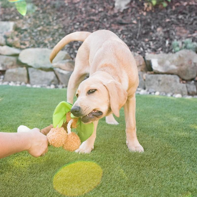 P.L.A.Y. Pet PLAY Tropical Paradise - Puppy Palm