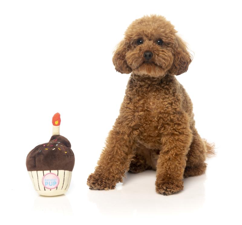 FuzzYard Birthday Cupcake