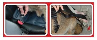 Clix Car Safe Tuig met autogordel, XS S M en L