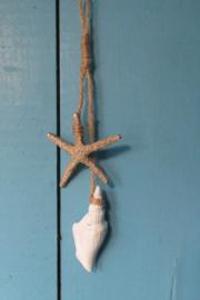 zeester/schelp ornament 17 cm