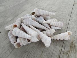 Schelp hoorntje wit 150 gram
