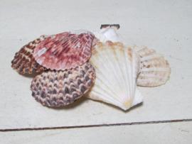 Schelpen naturel/wit roze 100 gram nr 29 (grotere schelpen)