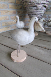 Zeevogel albatros