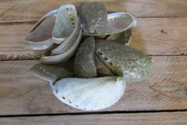 Schelpen parelmoer, 100 gram (nr 17)