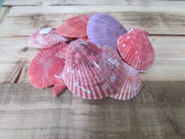 Schelpen roze/lila 80 gram  nr 24