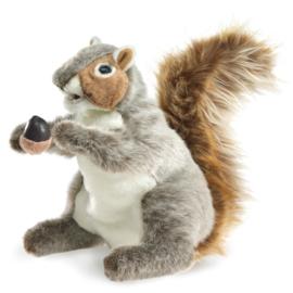 2553 Grijze eekhoorn