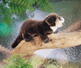 2266 Rivier otter