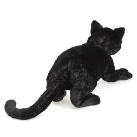 2987 zwarte kat