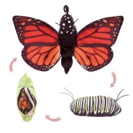 3073 Levenscyclus van een vlinder