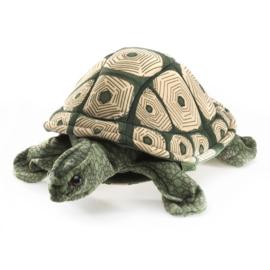 2181 Gevlekte schildpad