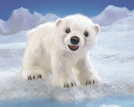 3041 Baby ijsbeer