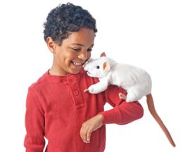 3038 Witte rat