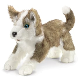 2994 wolf pup