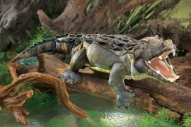 2921 Amerikaanse Alligator