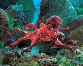 2974 rode octopus