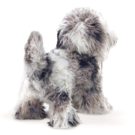 3143 Shih tzu puppy