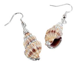 Schelpen oorbellen Ribbed Seashell Silver