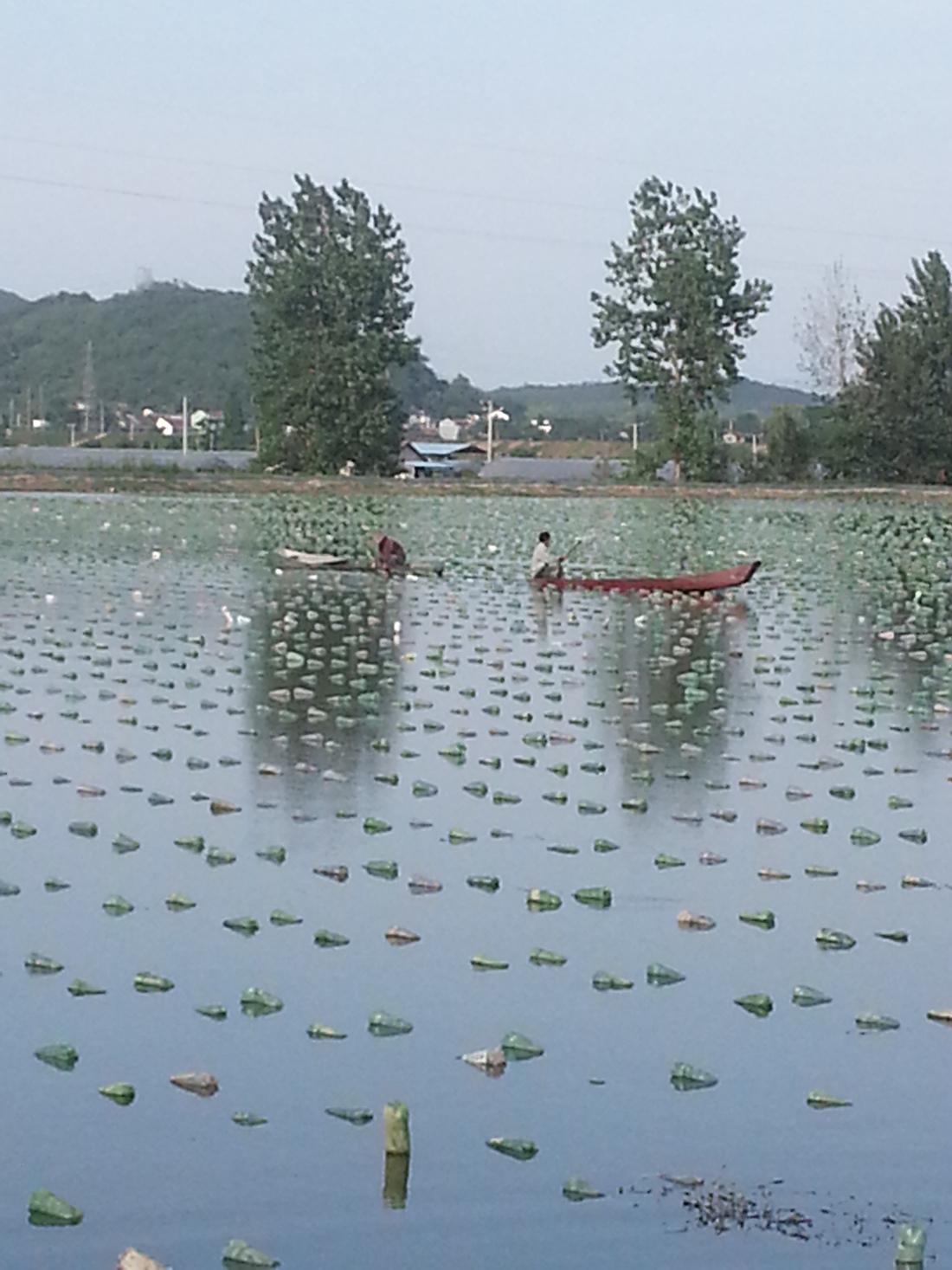 Oesters in meer