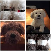 hondjes Maltezer en meer, diversen kleuren compleet pakket zonder vulling