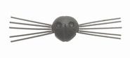 Neus met snorharen 21 mm zwart