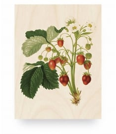 KEK Amsterdam Prints op Hout Botanical Strawberries M