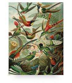 KEK Amsterdam Prints op Hout Exotic Birds S