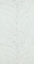 Van Gogh 17163