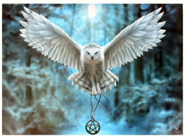 Awake your Magic - uil met pentagram - wandbord van Anne Stokes - 25 x 19 cm