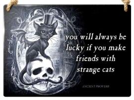 Emaille wandborden alchemy - Strange cats
