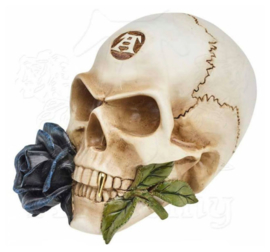 Alchemy of England the Vault - Black Rose Alchemist Skull - doodskop met roos -12.5 cm hoog