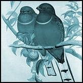 Vogels (overige)