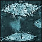 Vissen & zeedieren