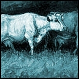 Koeiën & hoefdieren