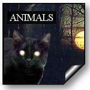 10 animals.jpg