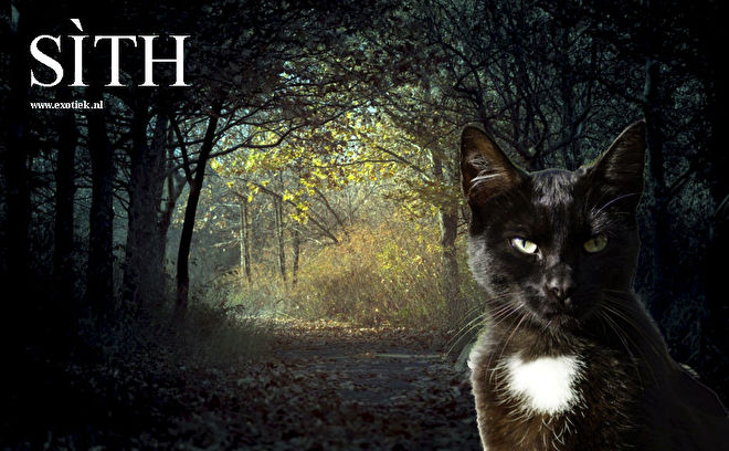 Keltische heksenkat Sith.jpg