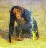 apen.jpg