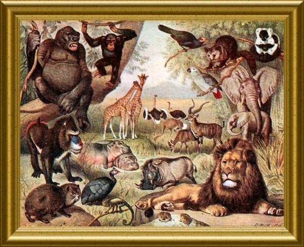 dierenframed.jpg