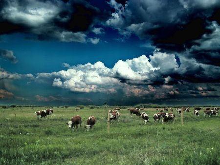 koeien door robert pasti.jpg