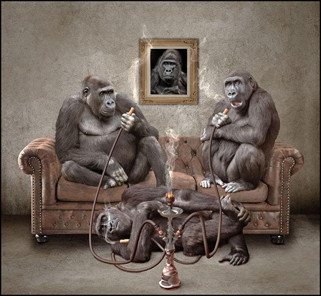 rokende apen.jpg