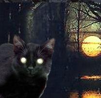 zwartekat.jpg