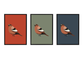 SET VAN 3 Vogels